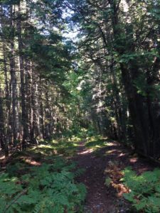 N-P Trail